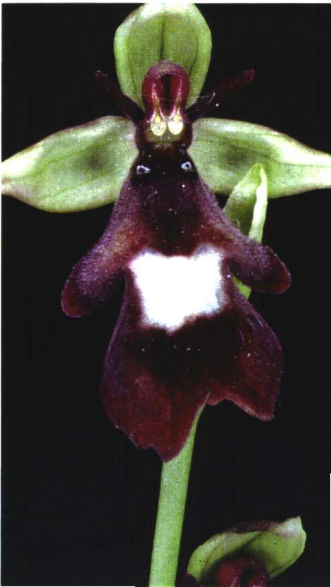 buona notte dans immagini buon...notte, giorno orchidea